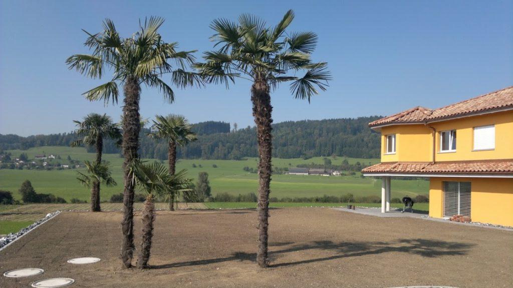 Neuanlage Gartenbau Sirnach Gartenunterhalt Thurgau